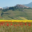 Castelluccio di Norcia — Stock Photo #38054257