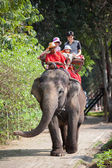 Ride on an elephant — Stock Photo