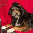 Foto de Stock  : Dog with a Laptop