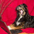 Стоковое фото: Dog with notebook yawning