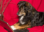 Dog with a notebook — Stock Photo
