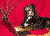 Dog with notebook yawning — Stockfoto