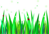 Ladybug on grass — Stock Vector