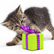 Kitten with green present — Stock Photo #36605789