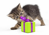 Kitten with green present — Stock Photo