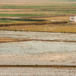 Rice Fields. Valencia. Spain — Stock Photo