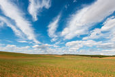 Germinated Cereal Field. Teruel. Spain — Stock Photo