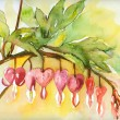 Bleeding Hearts Fowers — Stock Photo
