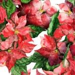 Poinsettias banner — Stock Photo #37543191