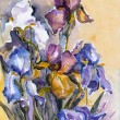 Iris Flowers — Stock Photo #37597553