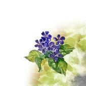 Violas Flowers — Stock fotografie