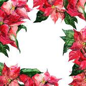 Poinsettias çerçeve — Stok fotoğraf