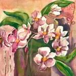 orquídeas — Foto Stock
