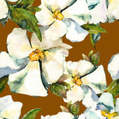 White flowers seamless pattern — Stock Photo