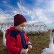 Stock Photo: Boy and geese.