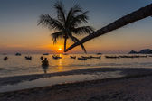 Palm tree over lagoon with boats at sunset — Stok fotoğraf