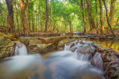Forest. Jungle tropic rain forest photography. — Stock Photo