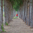Women wearing red shirts were walking on a trail lined with pines — Stok fotoğraf #47512125