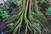 De wortel van de boom. de wortels van de boom waren voor een lange tijd. — Stockfoto