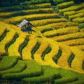 Terraced Rice Field in Chiangmai, Thailand — Foto Stock