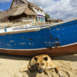 Dog near boat — Stock Photo