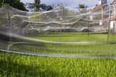 Rice seedlings under net for protection — Stock Photo