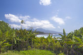 Paesaggio di mare con palme — Foto Stock