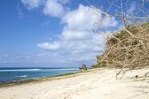 Tropical coast — Stock Photo