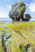 побережье с камнями — Стоковое фото