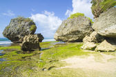 Coast  with rocks — Stock Photo