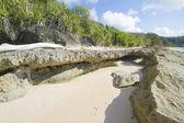 Tropische kust — Stockfoto