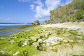 Tropical seashore — Stock Photo