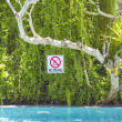No diving sign on the tree — Stock Photo #41893881