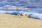 Crab on sand beach — Stock Photo