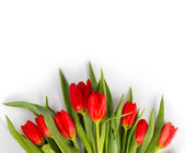 Tulip bouquet — Stockfoto