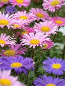 Blooms — Stock Photo