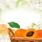 Ovoce — Stock fotografie