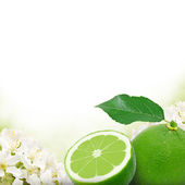 Lime and slice — Stock Photo