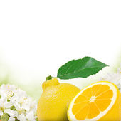 Fruit and blossoms — Stock Photo