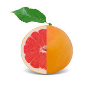 Grapefruit isolated — Foto Stock