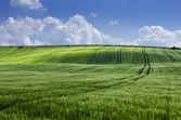 緑の野原と曇り空 — ストック写真