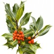 Holly branch with red berries — Stock Photo
