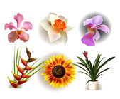 Flower set — Stock Vector