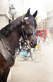 LONDON, UK - MAY 14, 2014: - Members of the Queen's Horse Guard on duty. Horse Guards Parade, London — Stock Photo