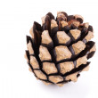 Fir tree cone on white background — Stock Photo