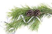 Pine twigs with cones on white background — Stock Photo