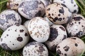 Small group of dappled quail eggs — Stock Photo