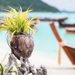 Plant in coconut pot on Asian beach. Decoration. — Stock Photo
