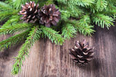 Fir tree twigs with three cones on wood background — Photo