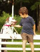 Little cute boy with dalmatian dog — Stock Photo